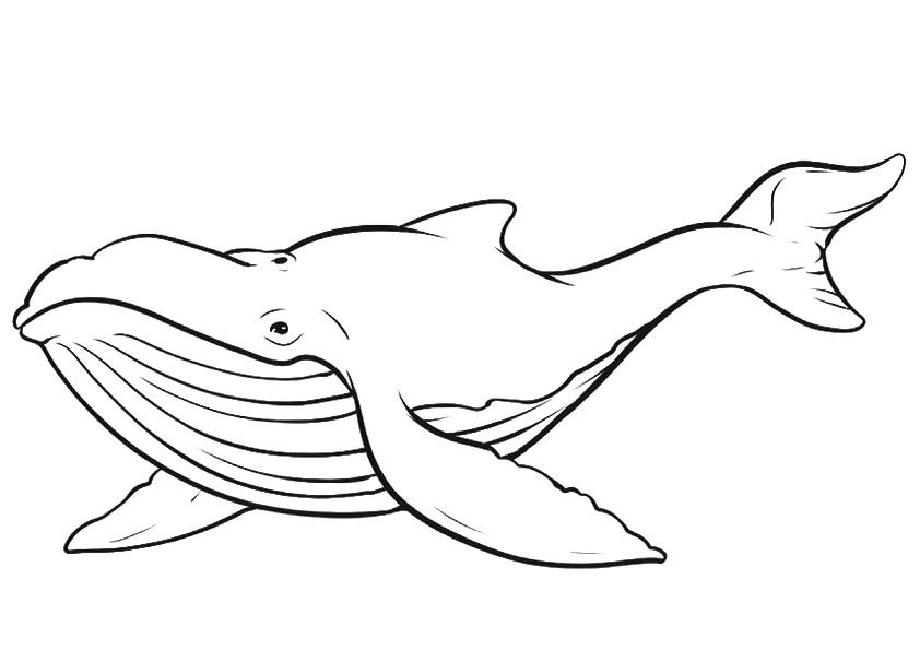 desenho de baleia para pintar 5