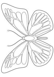 desenho de borboletas 1